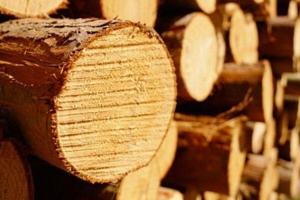 Ліс-кругляк від виробника у Київській області відтепер продають і на майданчику ТБ УЕБ